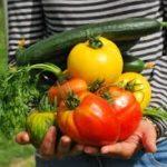 家庭菜園で野菜を作るコスパはどうなの?